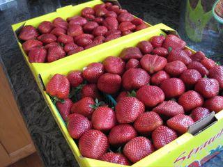 Berryfreshies